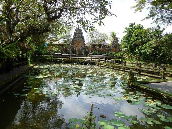 Cafe Lotus: Beautiful Garden