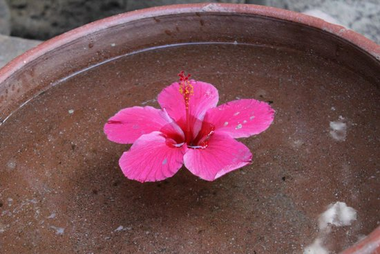 Hamanasi Adventure and Dive Resort: Foot wash