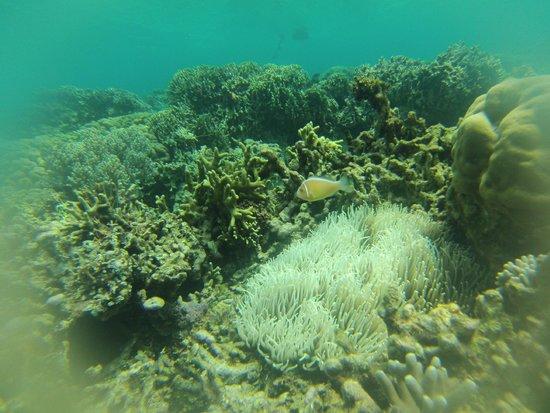 Bobocha Cottages Siladen: Clownfish