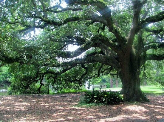 Audubon Park: In awe with the beautiful trees