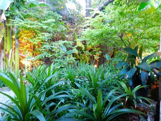 Issaya Siamese Club: Jackfruit tree