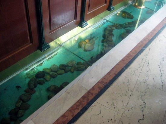 Arthotel ANA Adlon : Необычный аквариум у стойки рецепшен