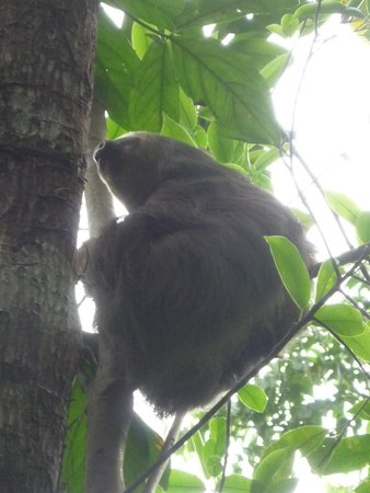 Congo Bongo Ecolodges Costa Rica : sloth behind our cabin