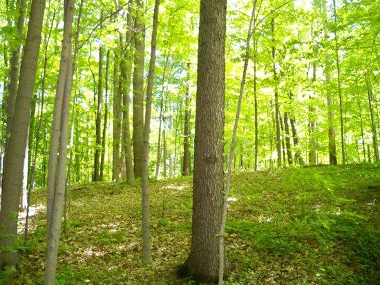 Streetsboro / Cleveland SE KOA : Woods near cabin