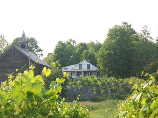 Whaleback Vineyard