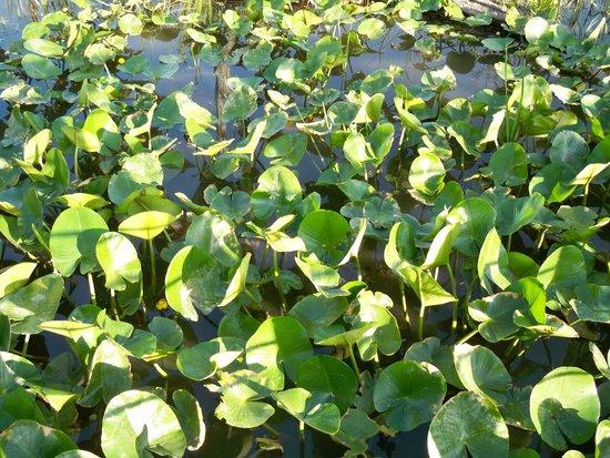 Beaver Marsh: Plants growing on marsh