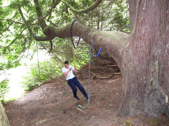 Derrymore House: swings
