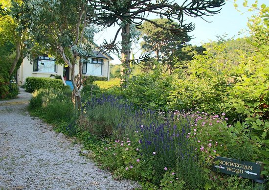 Norwegian Wood Organic Bed and Breakfast: View from entrance toward home