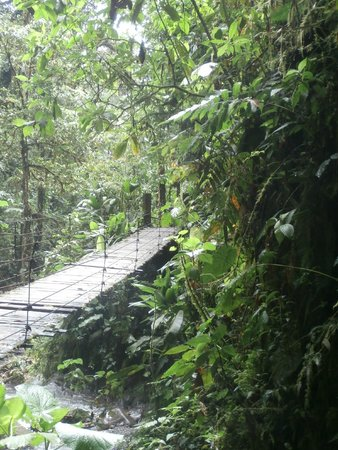 Mindo Nambillo Cloud Forest Reserve: Mindo