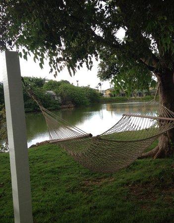 Shangri-La Bed & Breakfast: Hammock by pond