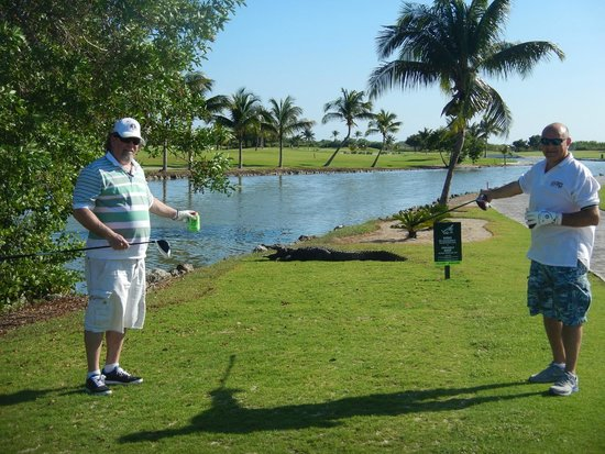 Iberostar Golf Club Cancun: Golfin with the crocs