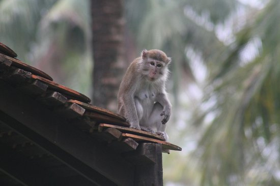 Club Med Cherating Beach: I may be cute but dont feed me!