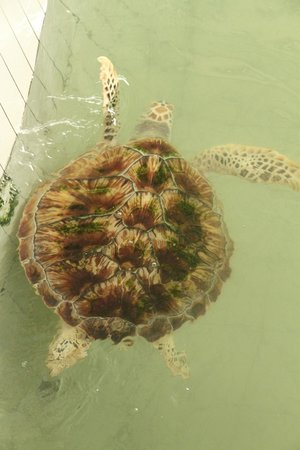 Club Med Cherating Beach: Turtle sanctuary nearby