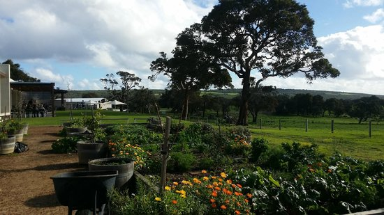 Eagle Bay Brewing Co: the veggie patch