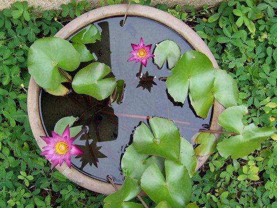 LHC Phuket Resort : in the garden
