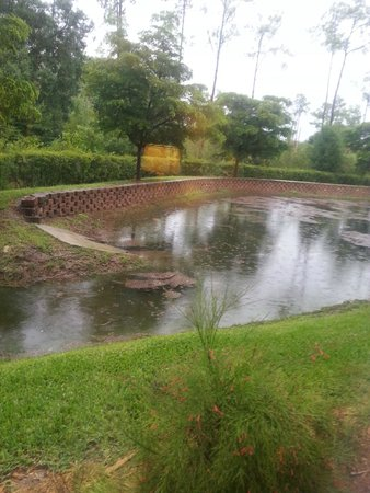 Hilton Garden Inn Fort Myers Airport / FGCU : Pond Area in Rear of Property
