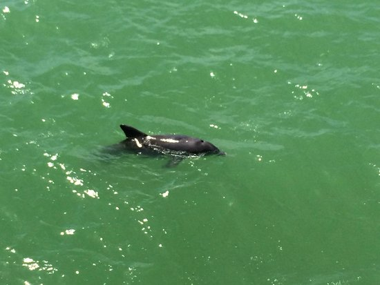 Naples Pier : Dolphin & Clear Water