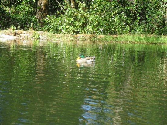 Suenos del Bosque : Un patito en el lago