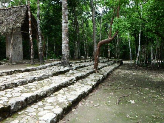 Ruines de Cobá : beautiful grounds look fun to explore