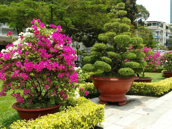 Ho Chi Minh Square : Some of the lovely shrubs at the Square