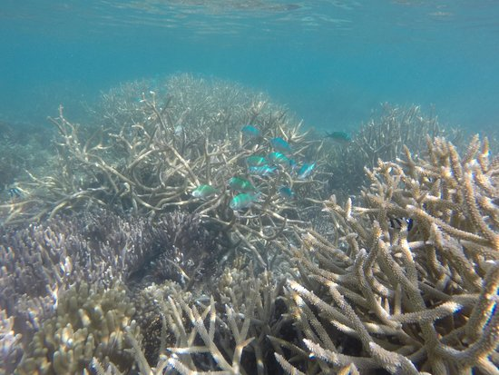 Fafa Island Resort: The coral and fish right outside our door