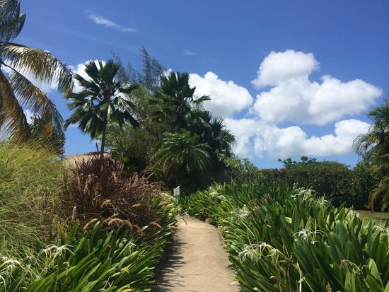 Blue Horizon Boutique Resort: The walkway