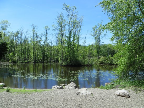 Sapsucker Woods: Pond