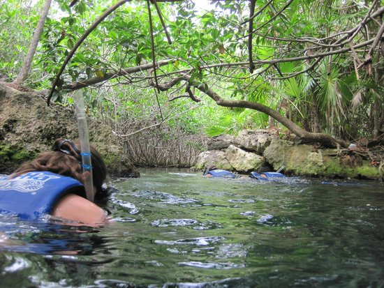 Parc Xel-Ha : Entrance cove at the top of the river for snorkeling