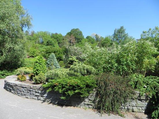 Cornell Botanic Gardens: Conifer garden