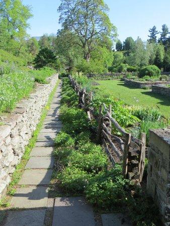 Cornell Botanic Gardens: More perennials