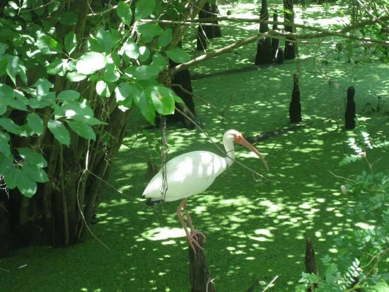 Lettuce Lake Regional Park: We saw several of these birds.