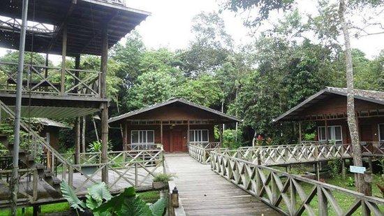 Borneo Nature Lodge: Our room