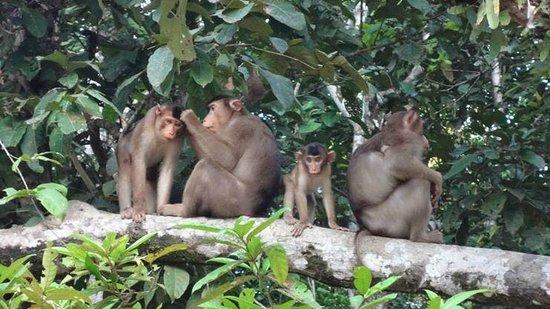 Borneo Nature Lodge: Family Time