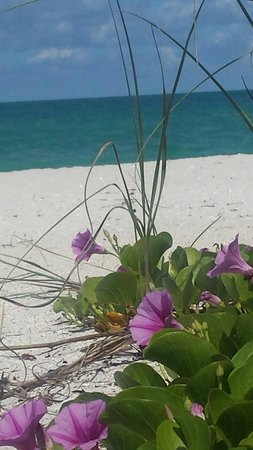 On the Beach- Casey Key: Beautiful.