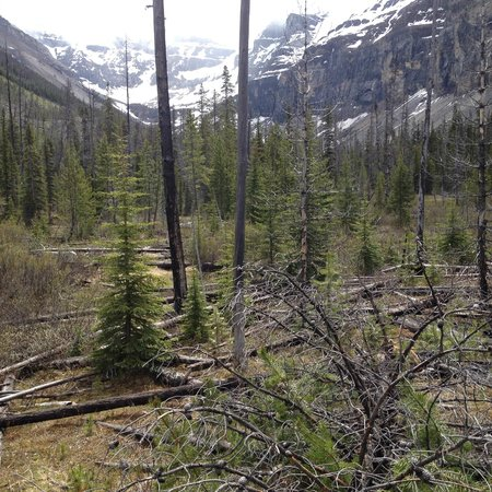 Great Divide Day Hikes : stanley glacier valley:  regrowth after fire