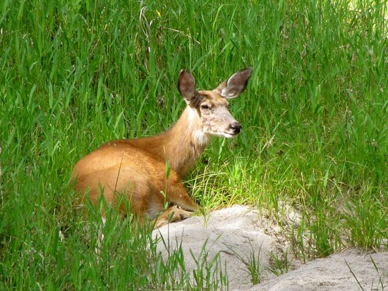 Run of the River: Deer frequent this refuge.