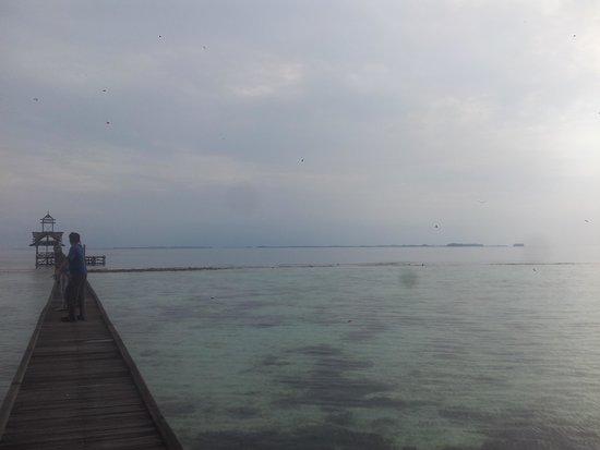 Alam Kotok Island Resort: West Marina