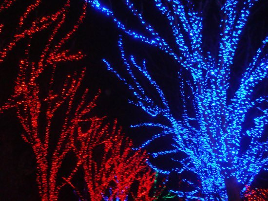 Oregon Zoo: During the Zoo Lights in December