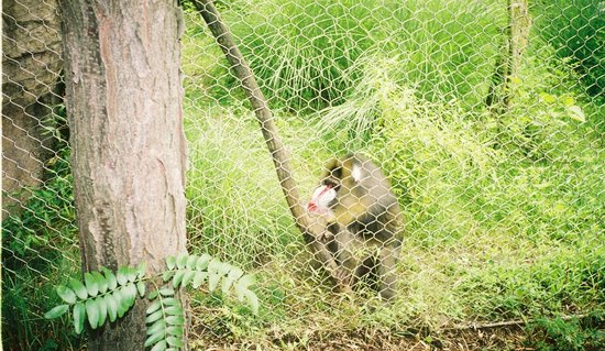 The Buffalo Zoo: Baboon saying hello