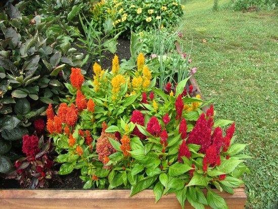 Pioneer Cabins & Guest Farm: Garden