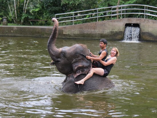 Elephant Safari Park & Lodge: Ride of my life