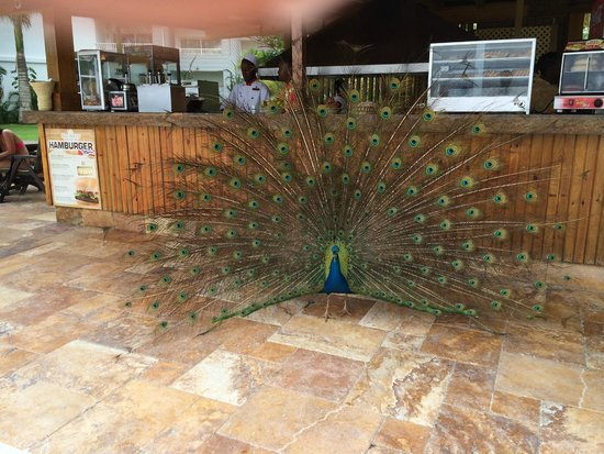 Secrets Wild Orchid Montego Bay: Barefoot Grill, showoff!