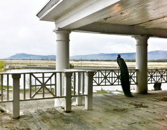 Hot Lake Springs Bed and Breakfast : What a view!