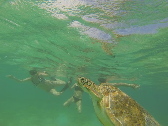 Viva Wyndham Maya - An All Inclusive Resort : tortues