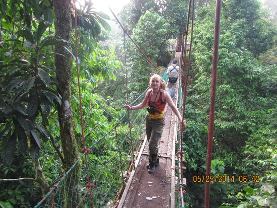 Borneo Rainforest Lodge canopy walk & canopy walk - Picture of Borneo Rainforest Lodge Danum Valley ...