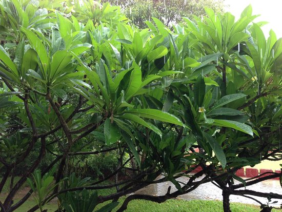 Thande Hotel Bagan : Beautiful plants