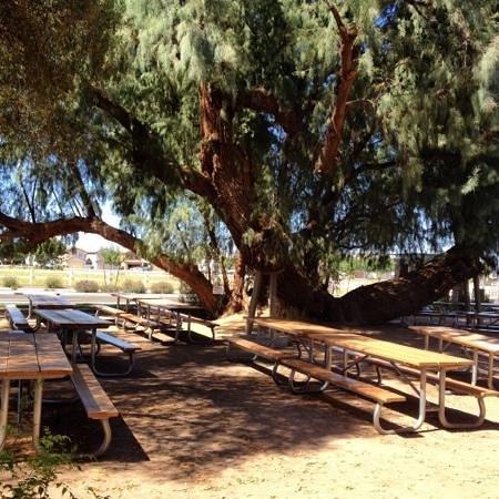 Joe's Farm Grill: the beautiful park like seating