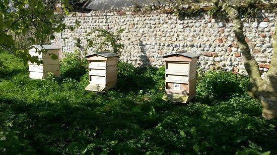 Felbrigg Hall: Bees