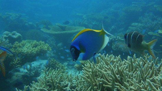 Meeru Island Resort & Spa : Snorkeling trip.