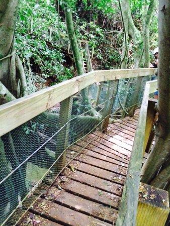 Outfitters Kauai: The bridge